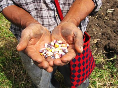 Holding the seeds of resistance