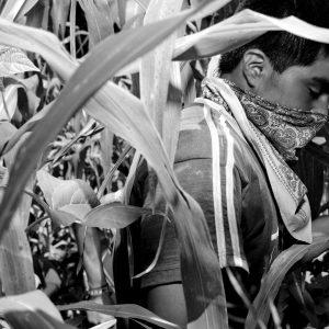 Zapatista farmer in cornfield, Chiapas, Mexico