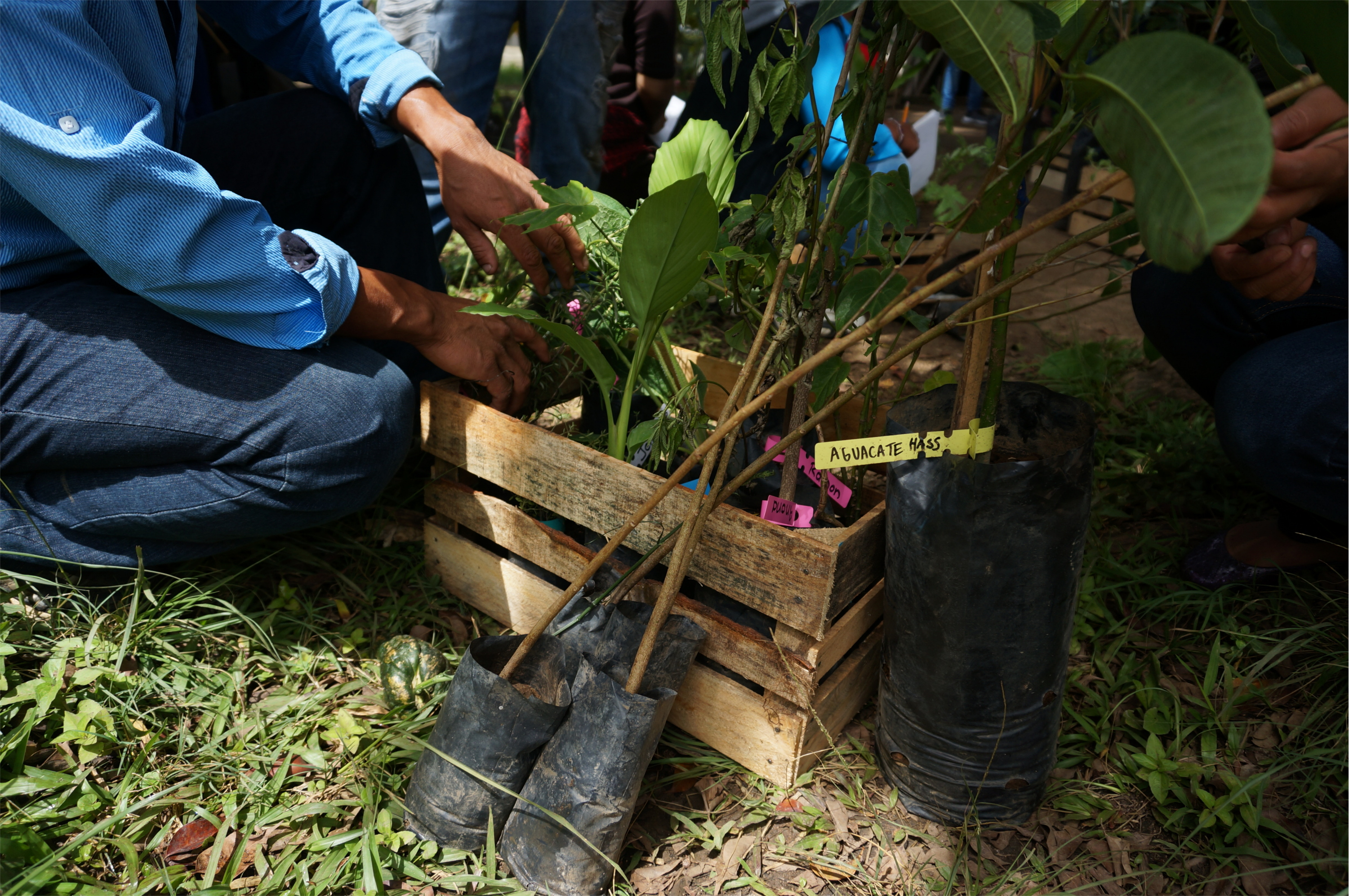 Edible Forest workshop in July 2017   Schools for Chiapas